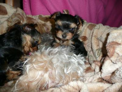 Gree To Good Home Dogs Mandurah