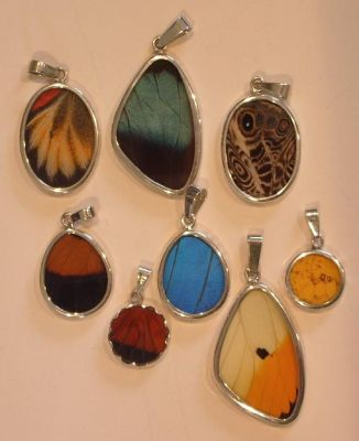 Real Butterfly Wing Jewellery