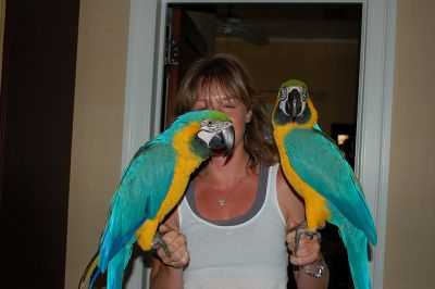 Male and Female Blue and gold macaw for good homes