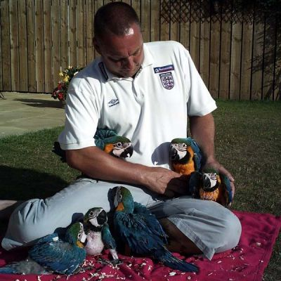 Home raised Macaw birds available.