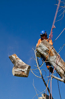Affordable Tree Removal Service Castle Hill