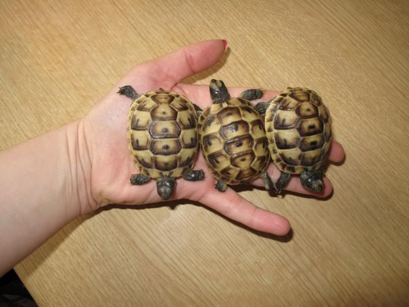 Tortoises and Turtles Now Available