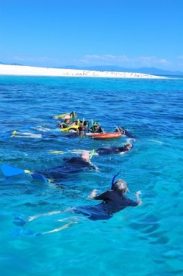Best Snorkelling on the Great Barrier Reef