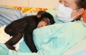 Ihave 2 male and female chimpanzee monkey's for adoption