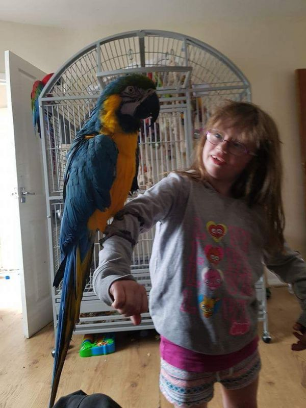 Lovely Macaw Love Kids And Dogs ,Extremely Clever.