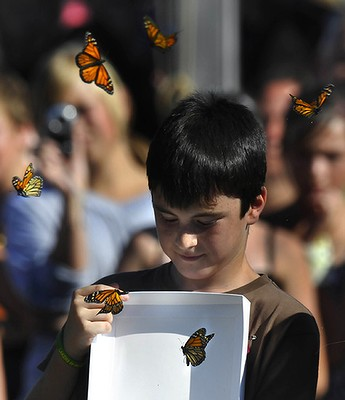 Live Butterflies for Release- Wedings