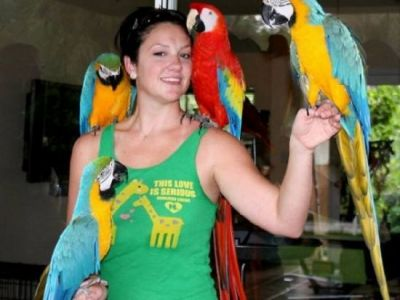 African grey parrots,macaws and fertile eggs for sale