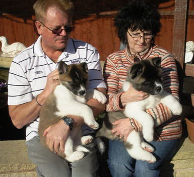 Akita Puppies For adoption